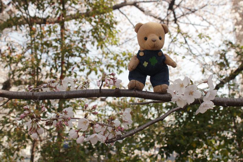 9418_桜の枝に立って見た