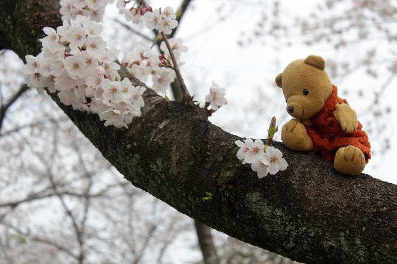 9724_木の上で花を見る