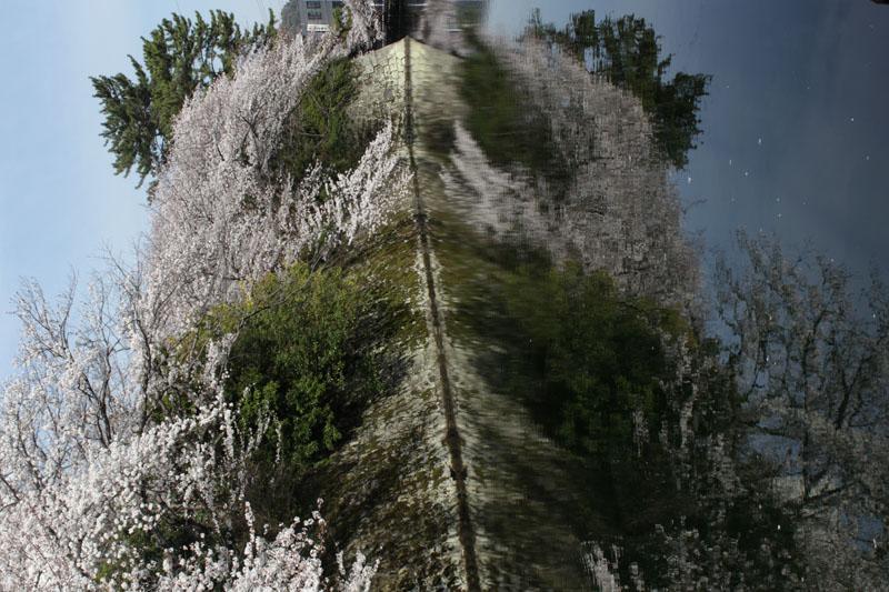 桜パンダの霊の例