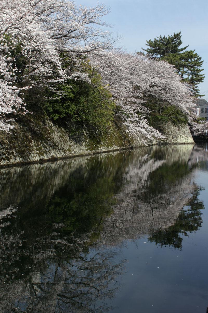 外堀・桜と映り込み・西向きに