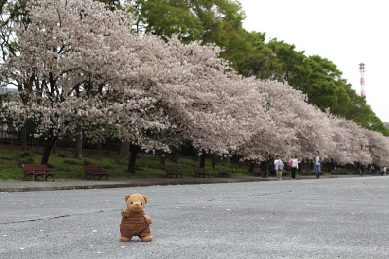 IMG_1279皇居前 八重桜をバックに 130406