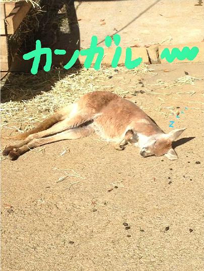 かんがるー_01