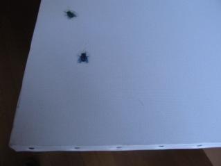 白いキャンバスに描かれた蠅