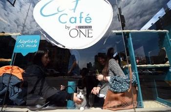 ニューヨーク初のキャットカフェ