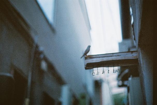 中崎町 鳥さん