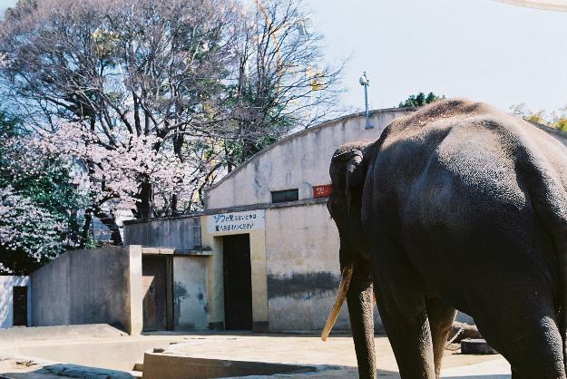 zoo ゾウさん♪