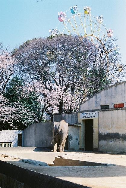 zoo ゾウさん