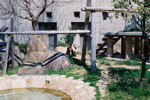 zoo パンダさん