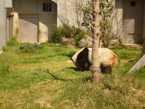 zoo パンダさん!