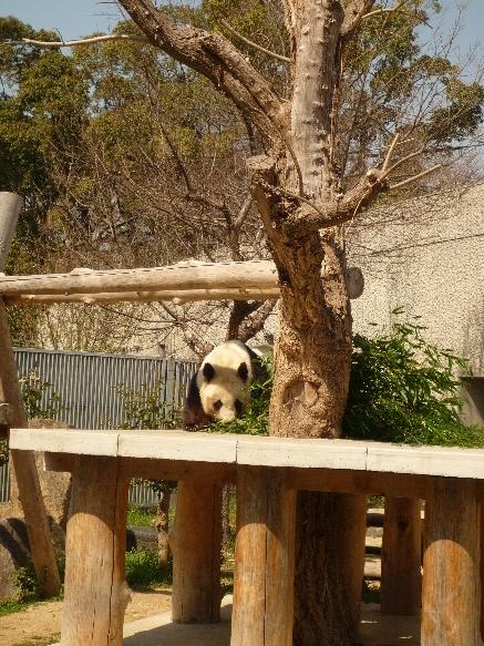 zoo パンダさん!!