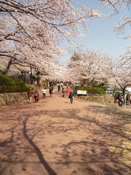 zoo 桜~桜~