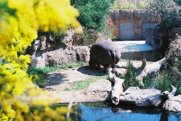 zoo カバさん