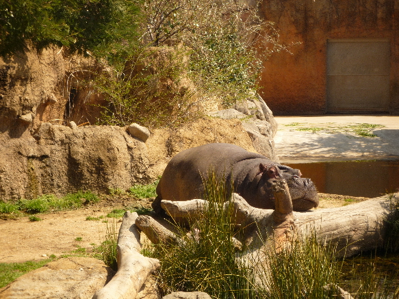 zoo かばさん