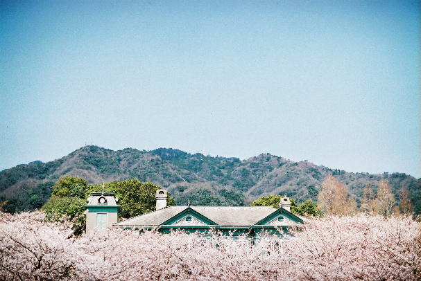 zoo 旧ヘンリー住宅と桜と山