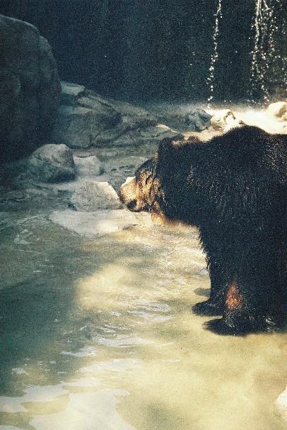 zoo クマさん