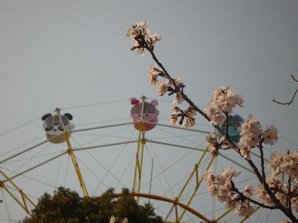 zoo 桜と観覧車と