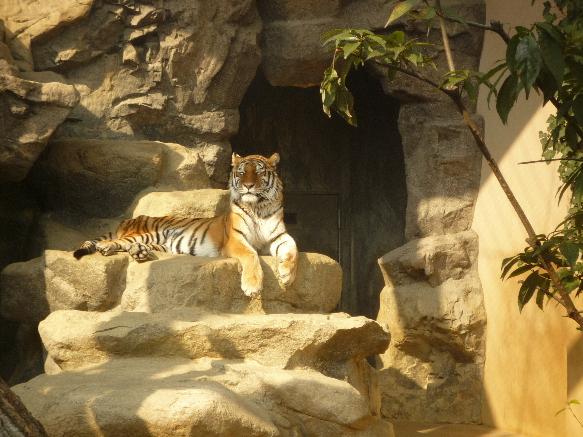 zoo とらさん!