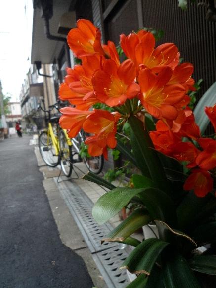 P お花♪ 中崎