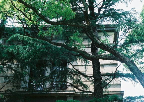 木々 神戸 m