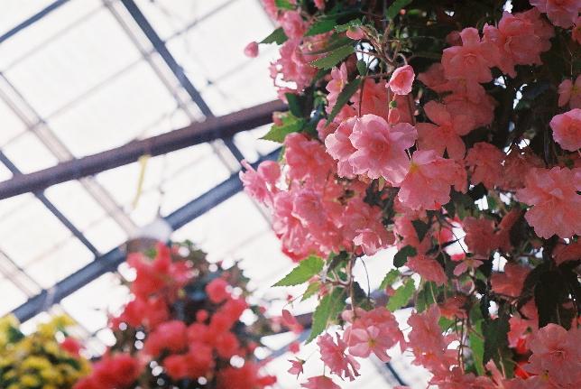 お花♪ 花鳥園 m
