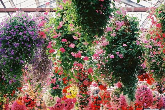 お花いっぱい♪ 花鳥園 m(1)
