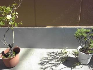 2012植木鉢
