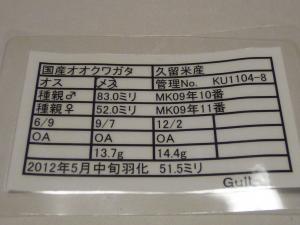 Gull KU1104-8 515カード