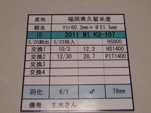 kaz2011MIKU107 795カード
