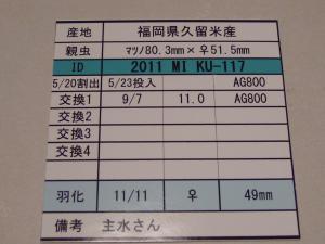 kaz2011MIKU117 490カード