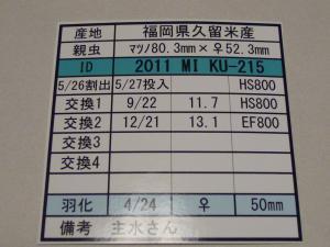 kaz2011MIKU215 515カード