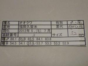 MK2011-3 524カード
