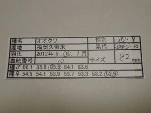 MK2011-10 822カード