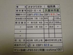 shimaH22-6 829カード