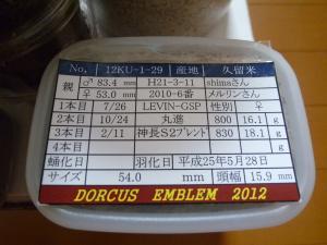 クマモン2012年1番54mm