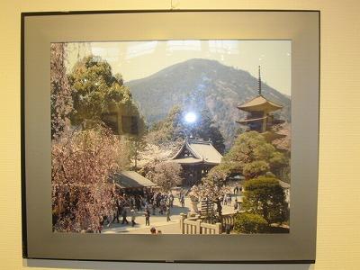 五重塔と桜~身延山
