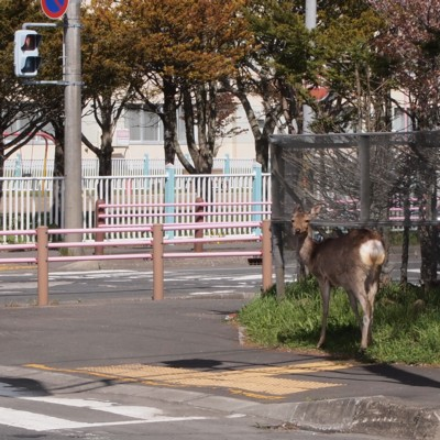 横断歩道の前で