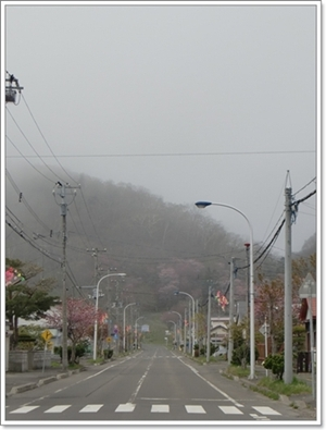 国泰寺方面の桜