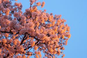 2012桜2