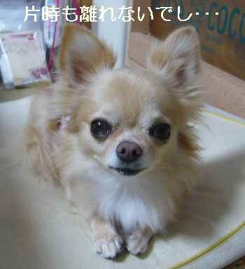 blog2012100501.jpg