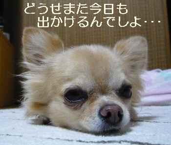 blog2012100601.jpg