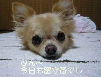 blog201210060601.jpg