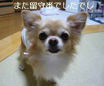 blog2012100903.jpg