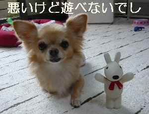 blog2012101103.jpg