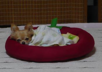 blog2012101201.jpg
