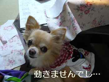 blog2012101801.jpg
