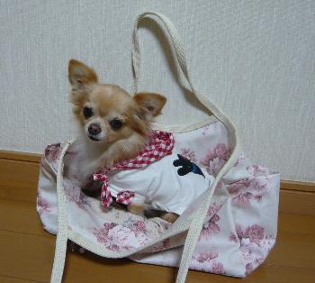 blog2012101804.jpg