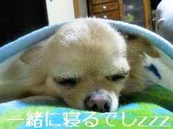 blog2012101901.jpg