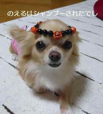 blog2012102102.jpg
