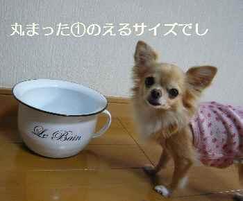 blog2012102816.jpg