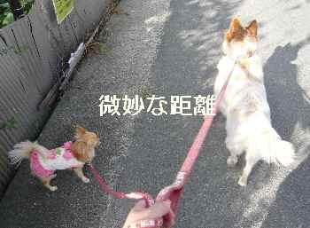 blog2012110202.jpg